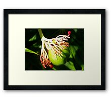Hula dancing flower pod Framed Print