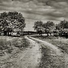 Country Road   2  ( BoneYard Series ) by Carla Jensen