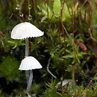 Mushrooms and Moss by muzwilson