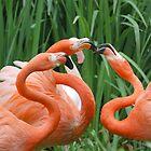 Flamingos by tstreet
