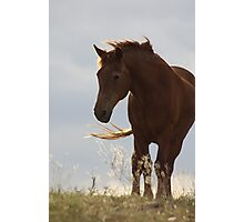 Standing ~Two~ Photographic Print