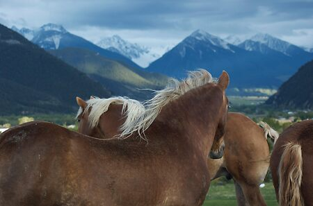 Manes & Mountains