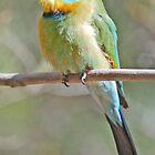 Rainbow Bee-Eeater, Alice Springs, Northern Territory, Australia by Adrian Paul