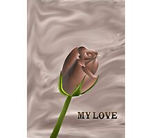 A chocolate rose for you my love....... Photographic Print