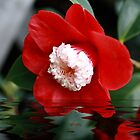 Camellia Reflections by Elaine Teague