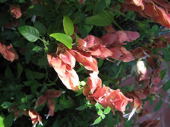 Shrimp Plant Solved  by Ginny Schmidt