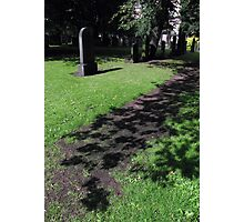 A flower carpeted path for the shadows Photographic Print