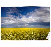 Carpet of Sunshine Poster
