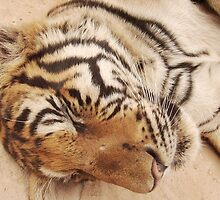 sleeping tiger by LIZBO
