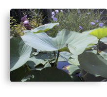 Lotus and Dragonfly Metal Print