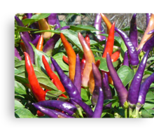 Color of Spice Canvas Print