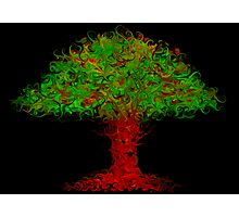 Dreamer's Tree Photographic Print