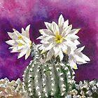 Cactus Discocactus horstii by rentia