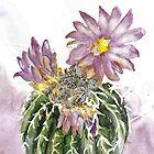 Cactus geohintonia mexicana by rentia