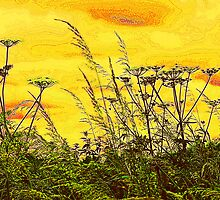 Yellow Sky and Cow Parsley. by Stan Owen