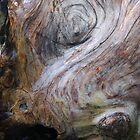 bathing trunk by yvesrossetti