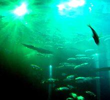 The Aquarium by blueclover