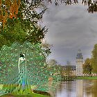 Waiting for king peacock by Heike Schenk Arena