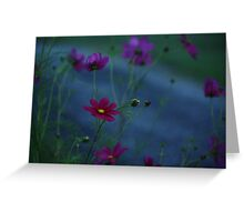 DAWN BLOSSOMS Greeting Card