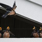 Mother Swallow feeding  four of her babies by Marjorie Wallace