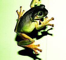 Green tree frog sliding down our window by robmac