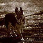 Pup by MattyWerts