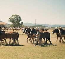 Eight Horse Hitch, Wingham Show by louisegreen