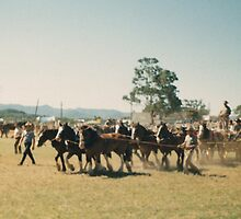 Wingham Show Grand Parade by louisegreen