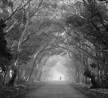 Tree Lane in mono by Hans Kawitzki