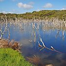 Woody Lake, Esperance, Western Australia by Adrian Paul