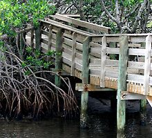 Boardwalk  Mangroves by barbz61
