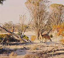 A bit of jiggery pokery while two kangaroos looked on by georgieboy98
