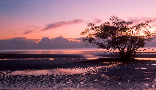 Nudgee is pretty in pink by Liza Yorkston