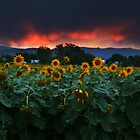 Sunsets Storms and Sunflowers by John  De Bord Photography