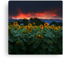 Sunsets Storms and Sunflowers Canvas Print