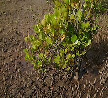 Greenery In A Sea Of Brown by reflector