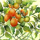 Tomatoes by LinFrye