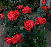 A Dozen Red Roses  by Irene  Burdell