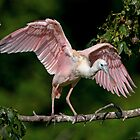 Cajun Flamingo by Bonnie T.  Barry