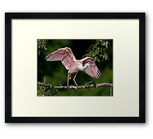Cajun Flamingo Framed Print