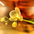 Orchid. Variable zoom by andreisky