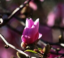 First Signs Of Spring by Evita