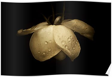 Midas touch . . . by Rosalie Dale