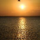 Seagull at sunrise by Antanas