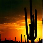 Sunset Cactus by gcampbell