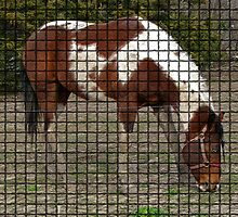 A Paint Horse done In Mosaic Tile by Linda Miller Gesualdo