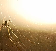 Spider in the evening glow by Rowan  Lewgalon