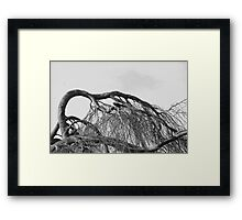 Crow within the Tangle Framed Print
