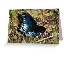 Brush-footed Butterfly Greeting Card