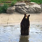 Bear by Celeste Thinks